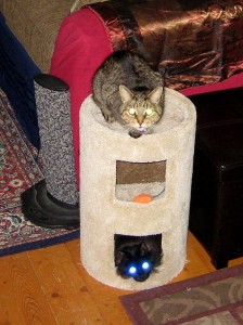 Alien demon cats take over the new scratching post.