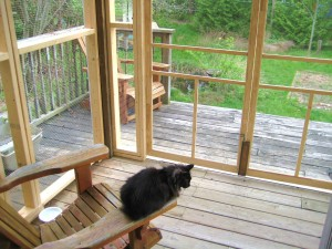 Miss Kitty Fantastico in her new outside room