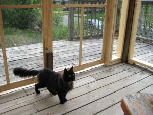 Miss Kitty in the new outside room, May 2013
